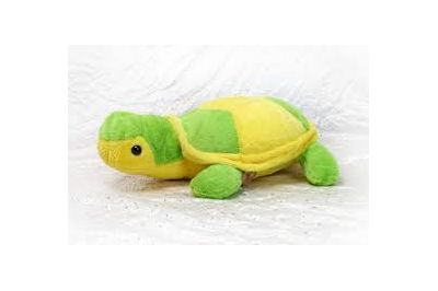 Small_Tortoise